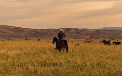 How to Maintain Your Montana Ranch