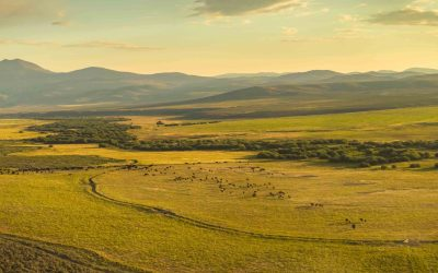 How to Start a Successful Ranching or Farming Operation