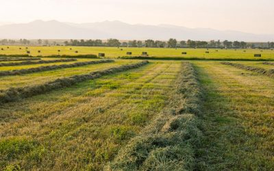 Preparing your Farm or Ranch for Sale