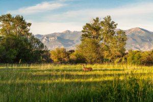Saul Creative-52 Paige Lane-Twin Bridges Montana-Stonefly Lodge-Nate FInch-8 Land Co-1643